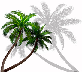 Vector palm trees with green leaves