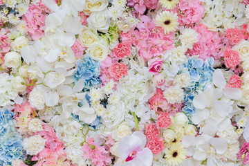 Search photos pastel flower pastel flower background mightylinksfo