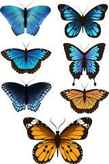 A set of beautiful butterflies, vector