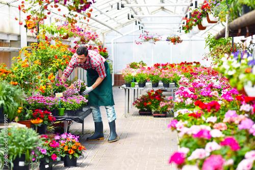 Gewächshaus mit bunten Blumen - Beruf Gärtner \