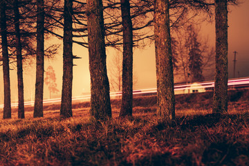 Trees against car light trails in the road at night.