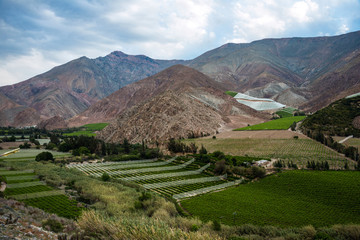 Vineyards of the Elqui Valley, Andes part of Atacama, Chile