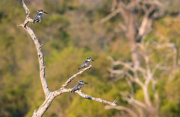 3 Graufischer auf einem Baum