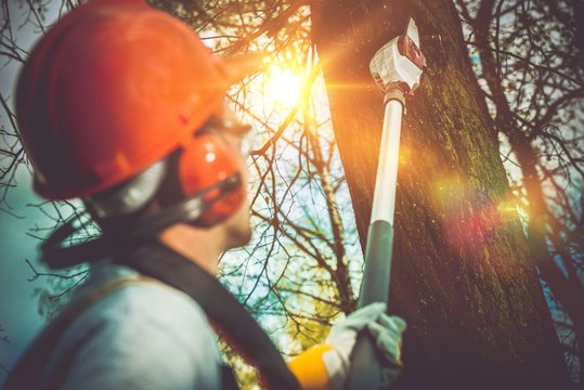Tree Branches Pro Cutting
