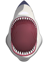 Shark with open mouth.Vector isolated.