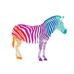 Colorful  Zebra, illustration isolated on white background
