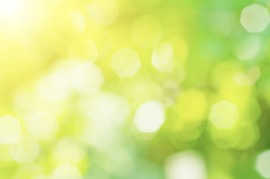 Sunny abstract green nature blurred background, eco spring concept