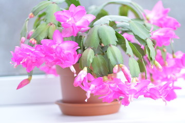 Spring background for the web site banner