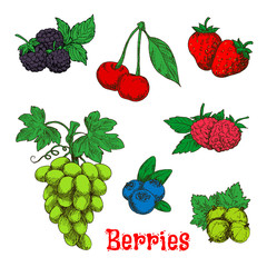 Colorful appetizing fruits and berries sketches