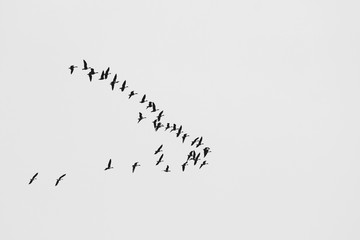 Black and white photo with flying birds