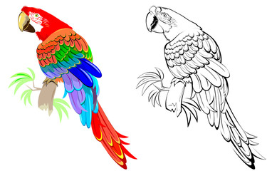 Colorful and black and white pattern parrot, vector cartoon image.