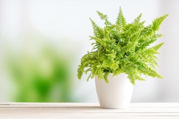 Fern in a white flowerpot