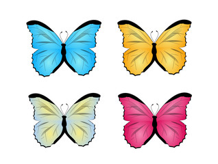 Butterfly set illustrations
