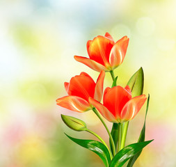 Spring landscape. beautiful spring flowers tulip