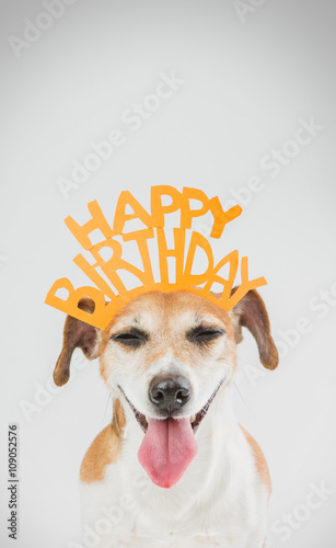 Happy Birthday Card With Laughing Joy Dog Jack Russell Terrier Grey