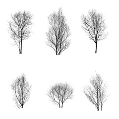 Collection of trees silhouette on white background