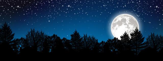 Panoramic starry night landscape