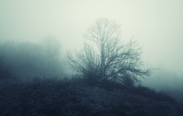 dark landscape tree in fog