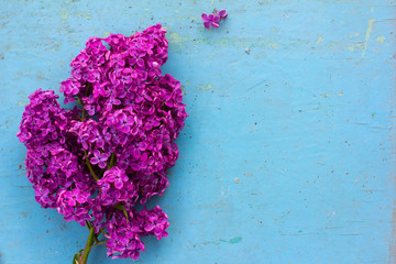 bouquet of purple lilac flowers on a blue wooden plank background. with space for posting information