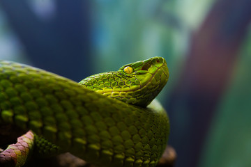 Green Snake Background