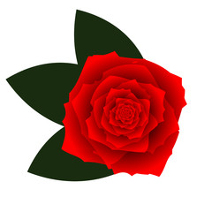 Red vector rose on white background
