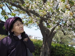桜と80歳の母