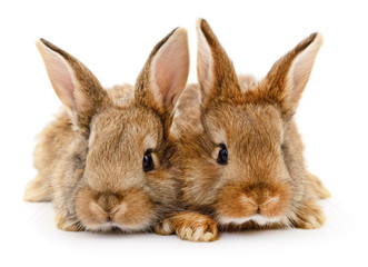 Two brown rabbits.
