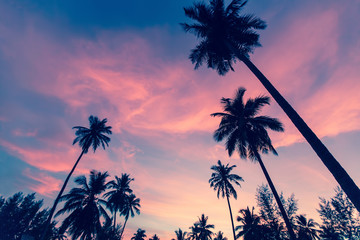 Silhouettes of palm trees against the sky at dusk.