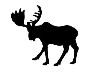 Silhouette adult moose