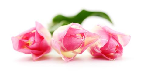 Three pink tulips.