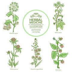 Medical herbs watercolor collectionn of medicinal plants