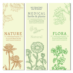 Flowers and herb template banner hand drawn vintage