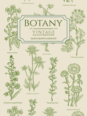 Botany book cover template vintage hand drawn