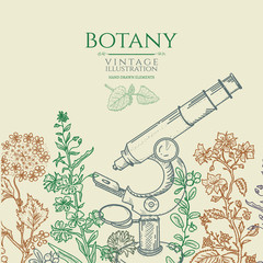 Botany vintage hand drawn vector illustration