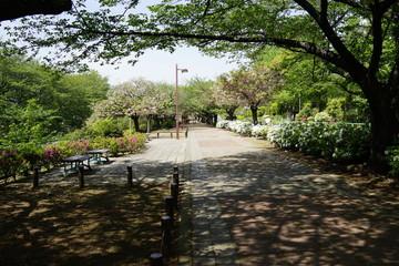 春の公園 新緑 犬の散歩 木陰