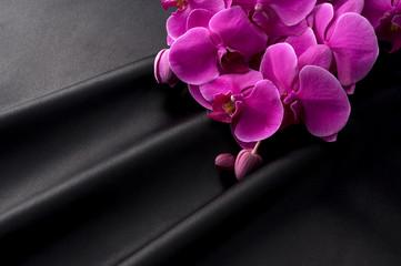 黒色のサテンとピンク色の胡蝶蘭