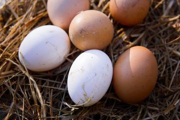 Organic farmer eggs