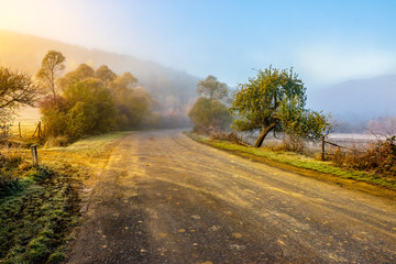 road  near forest in foggy mountains at sunrise