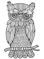 doodle illustration of owl