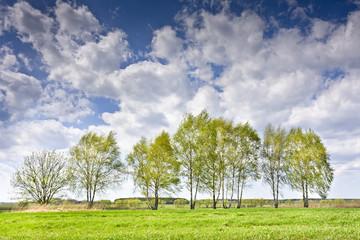 Krajobraz z kilkoma drzewami i chmurami na błękitnym niebie. Wiejski krajobraz wczesną wiosną w pogodny dzień.