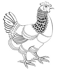 Black and white illustration of hen, vector cartoon image.