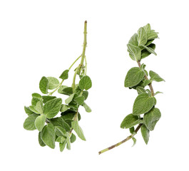 two oregano branches on a white background