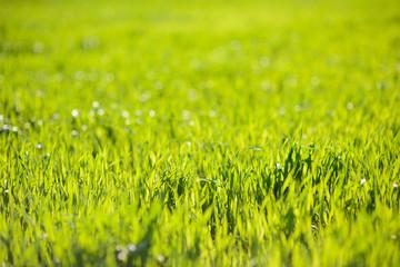 Bright and Fresh Grass