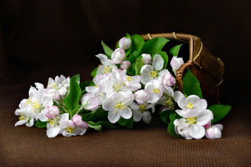 still life with a basket of flowers apple.