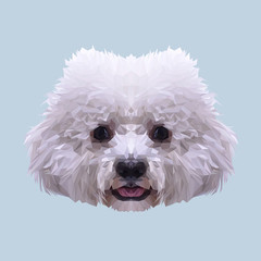 White Bichon Frise dog animal low poly design. Triangle vector illustration.
