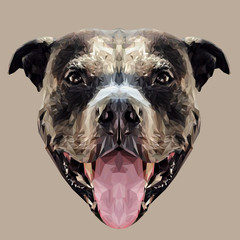 American Pit Bull Terrier dog animal low poly design. Triangle vector illustration.