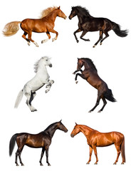 Group of horse collection isolated on white background