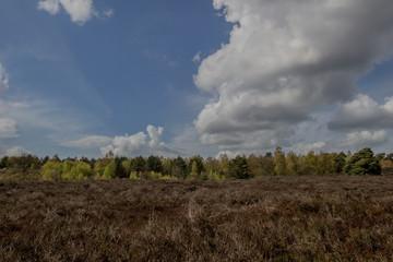 Heerde heather field