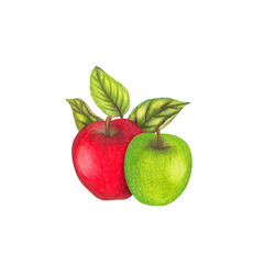 Hand drawn red and green apples