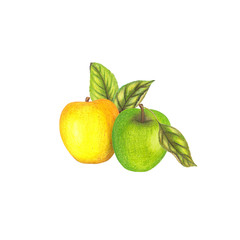 Isolated illustration with yellow and green apples
